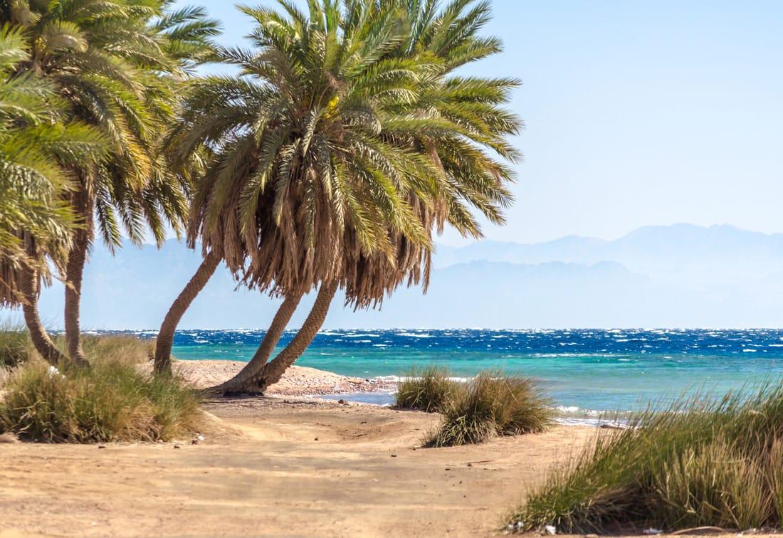 South Oasis Dahab