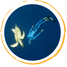 Freediving Courses with flexible schedule
